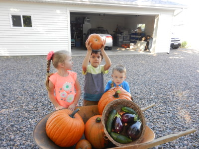 A wheelbarrow helps us transport some of our pumpkins.