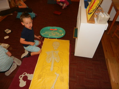 Children learn the names of bones inside the human body using a life-size skeleton.